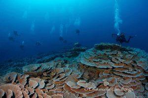 plongée et coraux