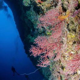 La Faille de Taravao  (plongée profonde)